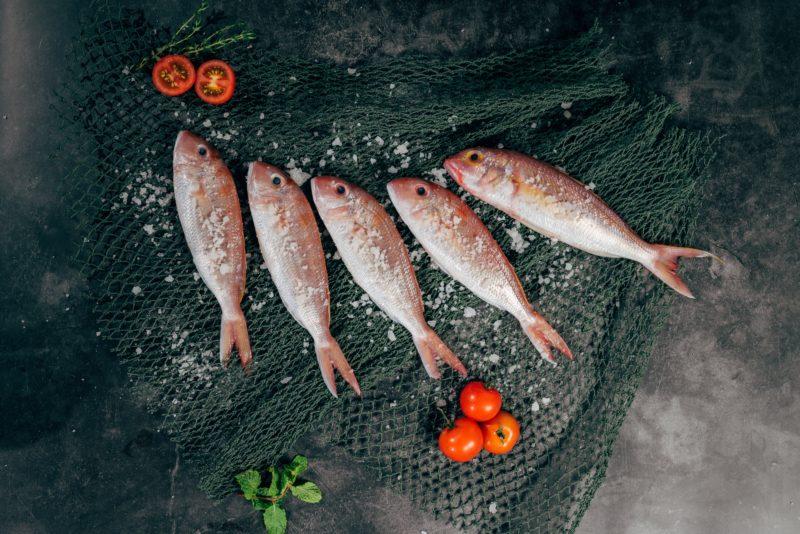 魚肉イメージ