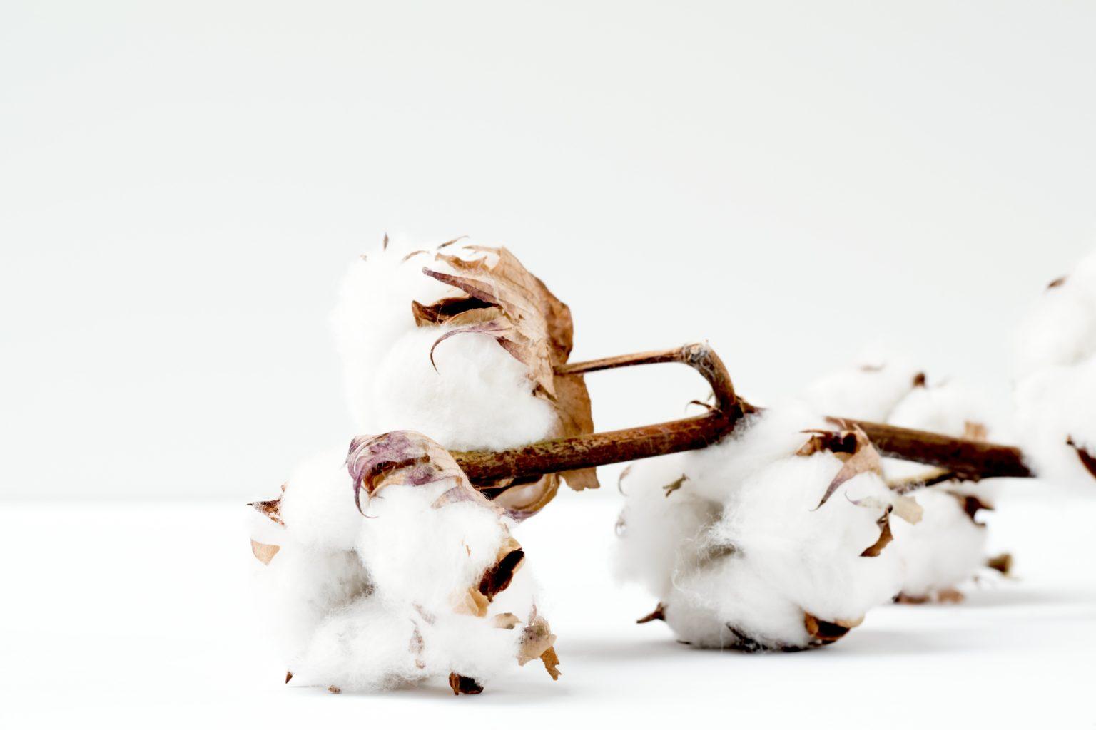綿100% コットン