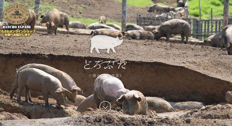 エルパソ豚農場
