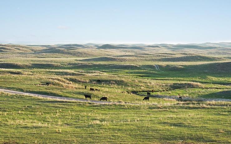 ホライズンファーム モーガン牧場