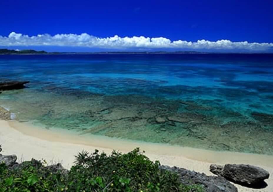 沖縄の恵み