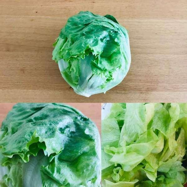 無農薬野菜ミレーの玉レタス