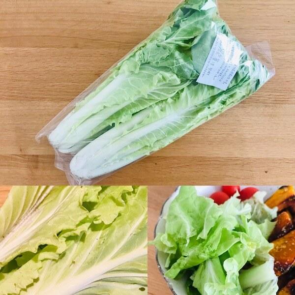 無農薬野菜のミレーの山東菜